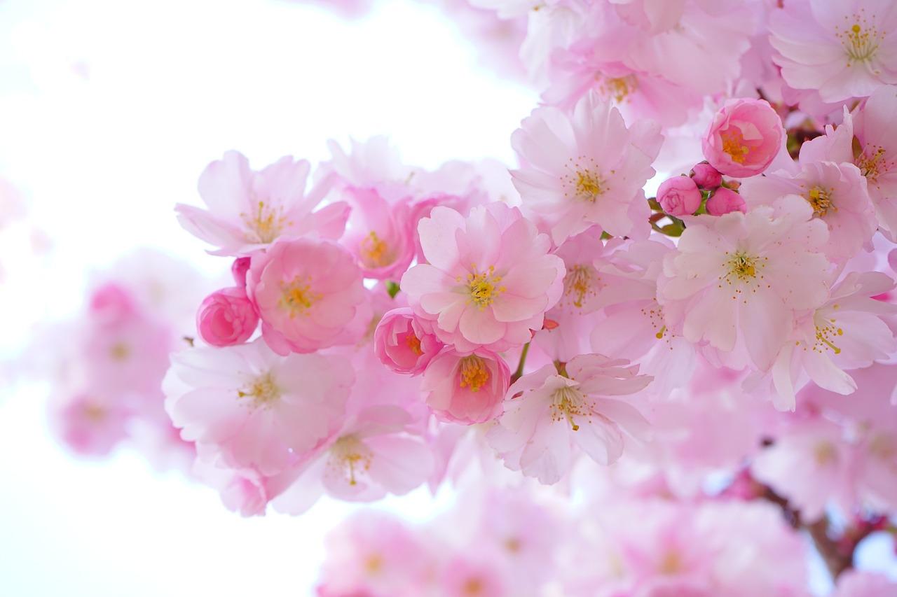 pink-324175_1280